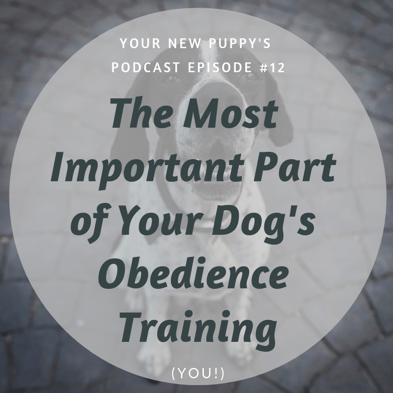 YNP #012: The Most Important Part of Your Dog's Obedience
