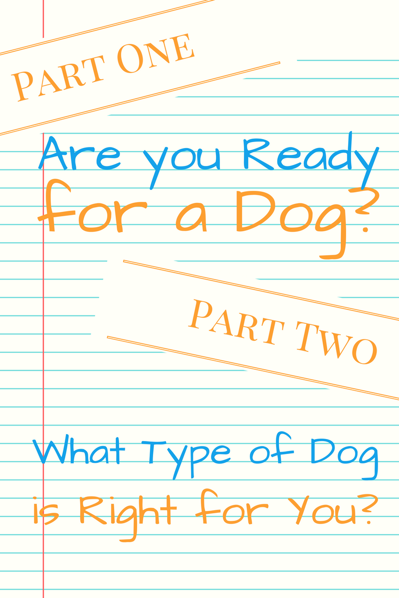 Dog Training, Dog Behavior, and Belly Rubs - Playtime Paws