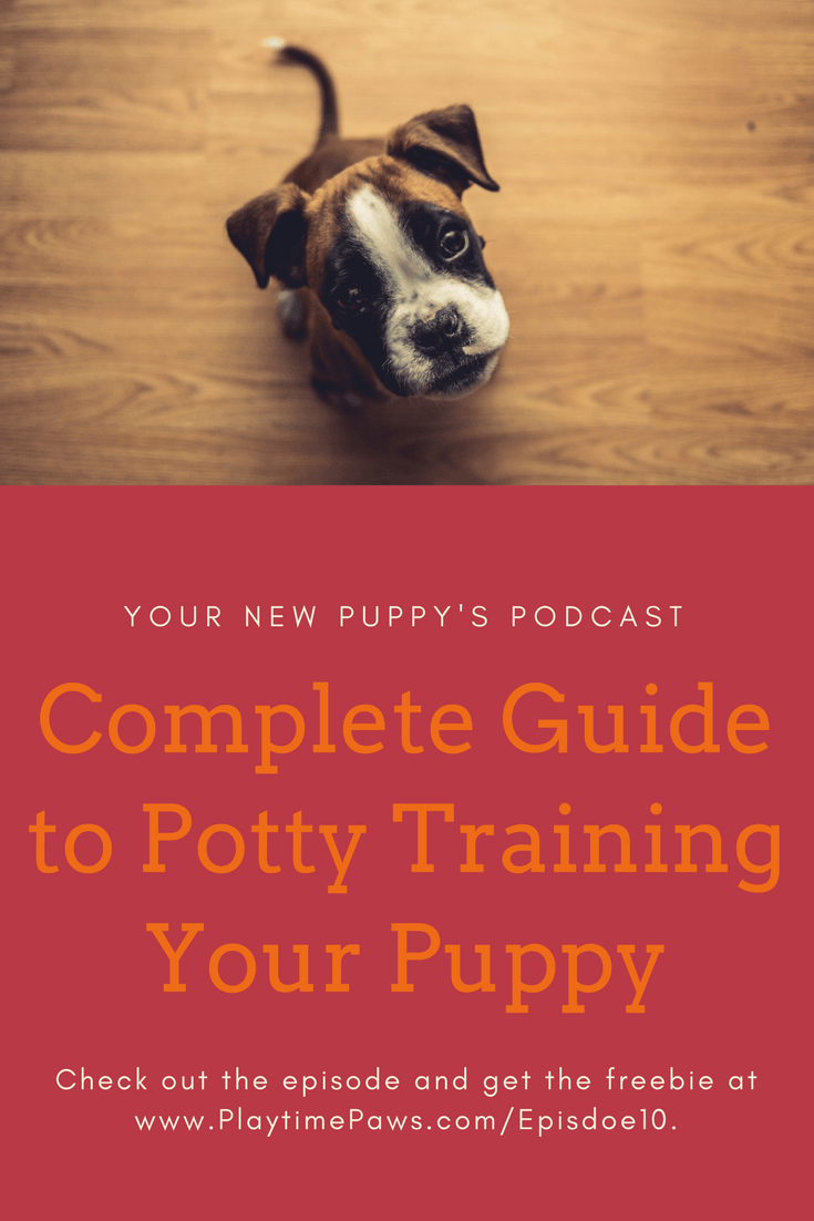 how to train your new puppy potty training