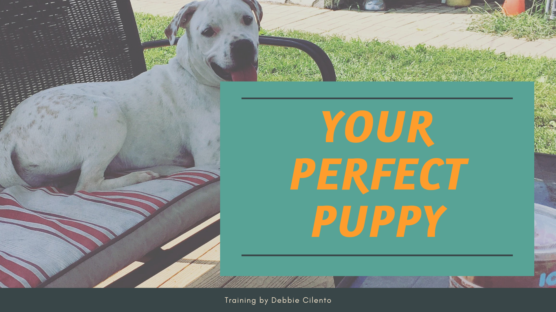 YOUR Perfect Puppy - Playtime Paws